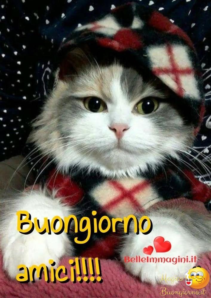 Buongiorno da mandare for Buongiorno con gattini