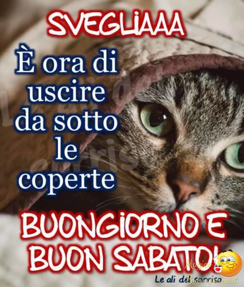 Immagini di buongiorno sabato per whatsapp for Immagini divertenti buongiorno sabato