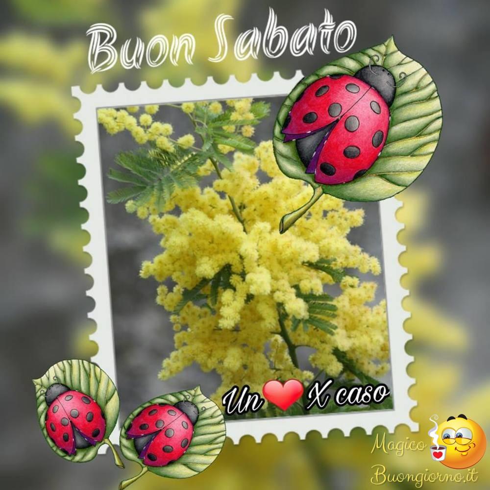 Sabato Buongiorno per Facebook e Whatsapp 84