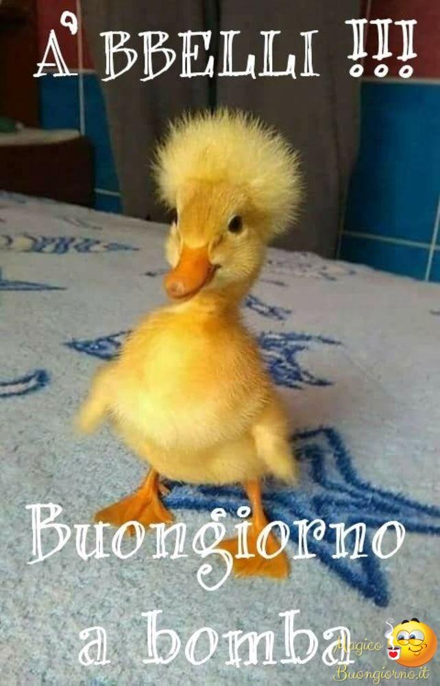 Buongiorno foto belle immagini divertenti per whatsapp e for Immagini divertenti buon giorno