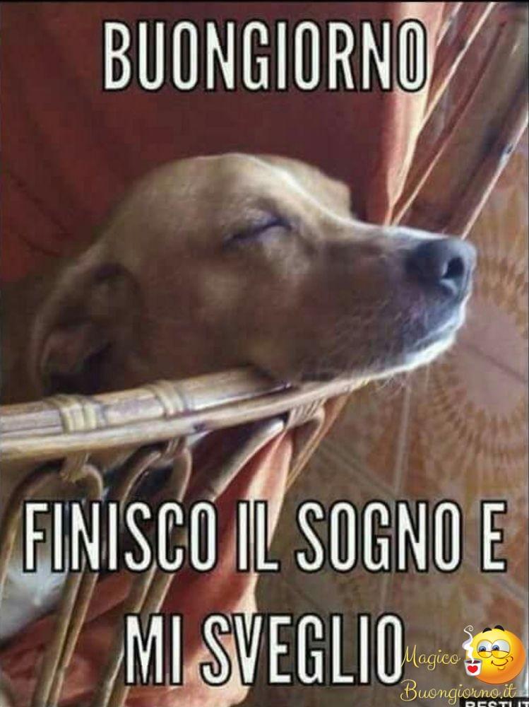 Buongiorno foto belle immagini divertenti per whatsapp e for Immagini divertenti del buongiorno gratis