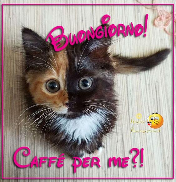 Buongiorno-Immagini-Whatsapp-Gatto