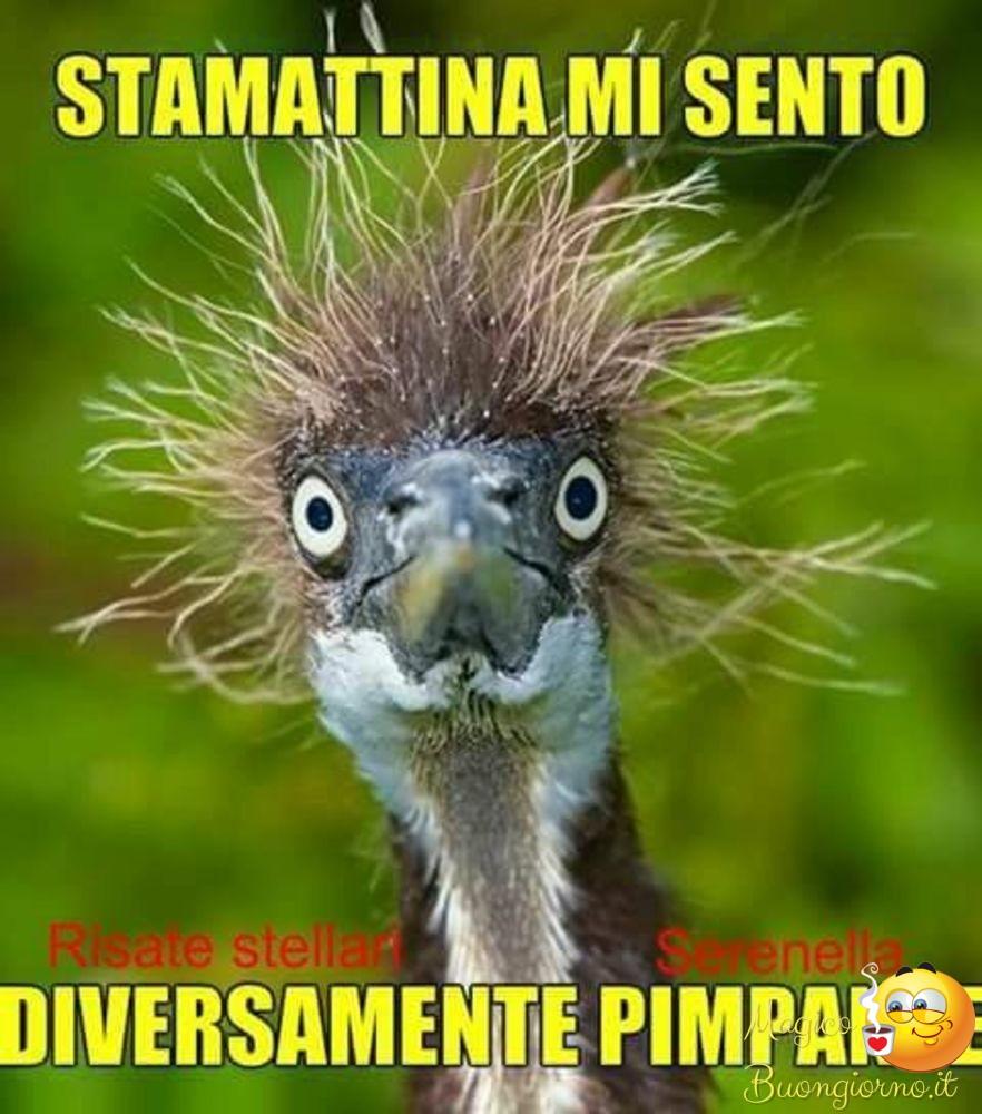 Immagini di buongiorno da scaricare gratis per whatsapp for Immagini buongiorno gratis divertenti