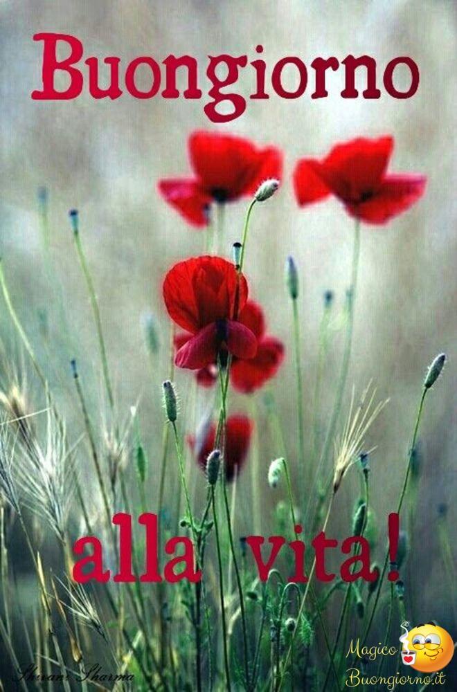 Immagini-di-buongiorno-da-scaricare-gratis-per-whatsapp-268